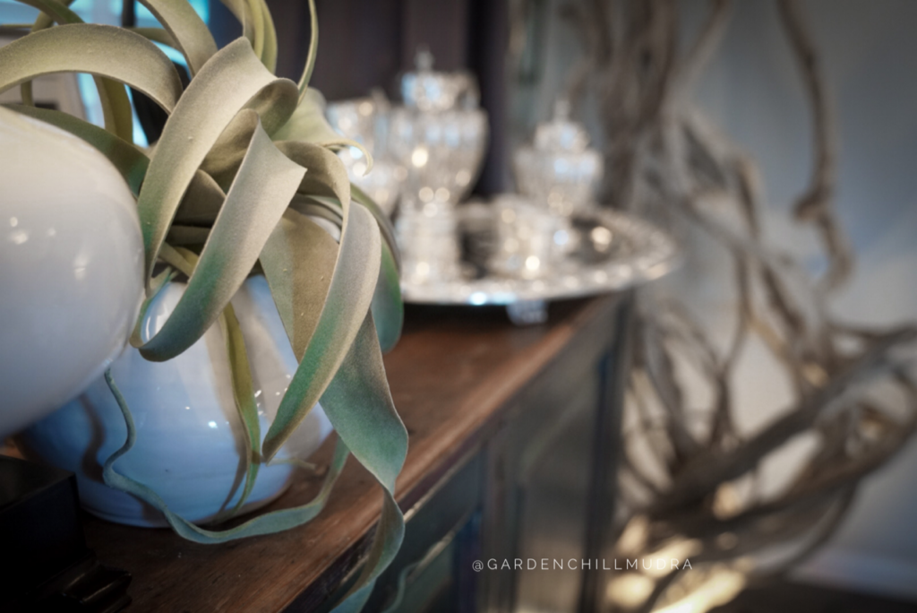 Create a Stunning tablescape as a designer 4.  How to use a simple vase to create a bold statement on your tablescape
