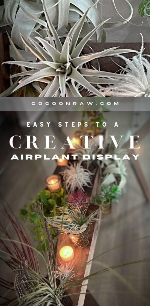 Creative Airplant Display