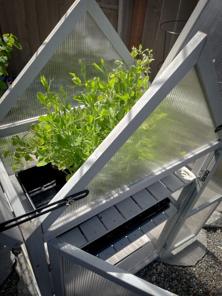 Favorite gardening Tools 28. Favorite Gardening Greenhouse Cabinet Tool with plants inside