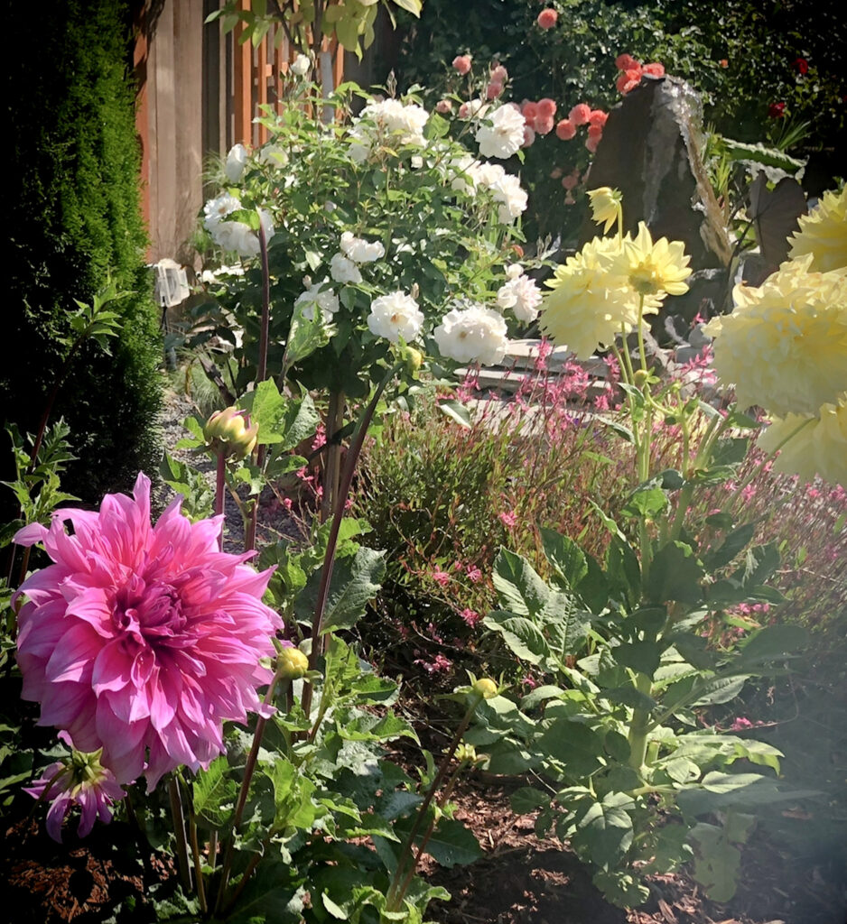 Favorite Gardening Tools 2. Beautiful Garden View showing Roses and Dahlias with Pond Feature on the background.