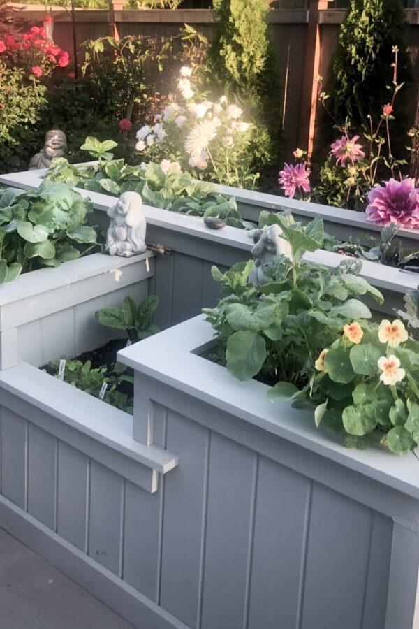 Favorite garden planter with flowers all around