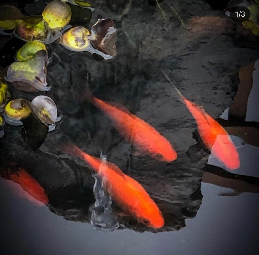 Favorite Gardening Tool Fish.