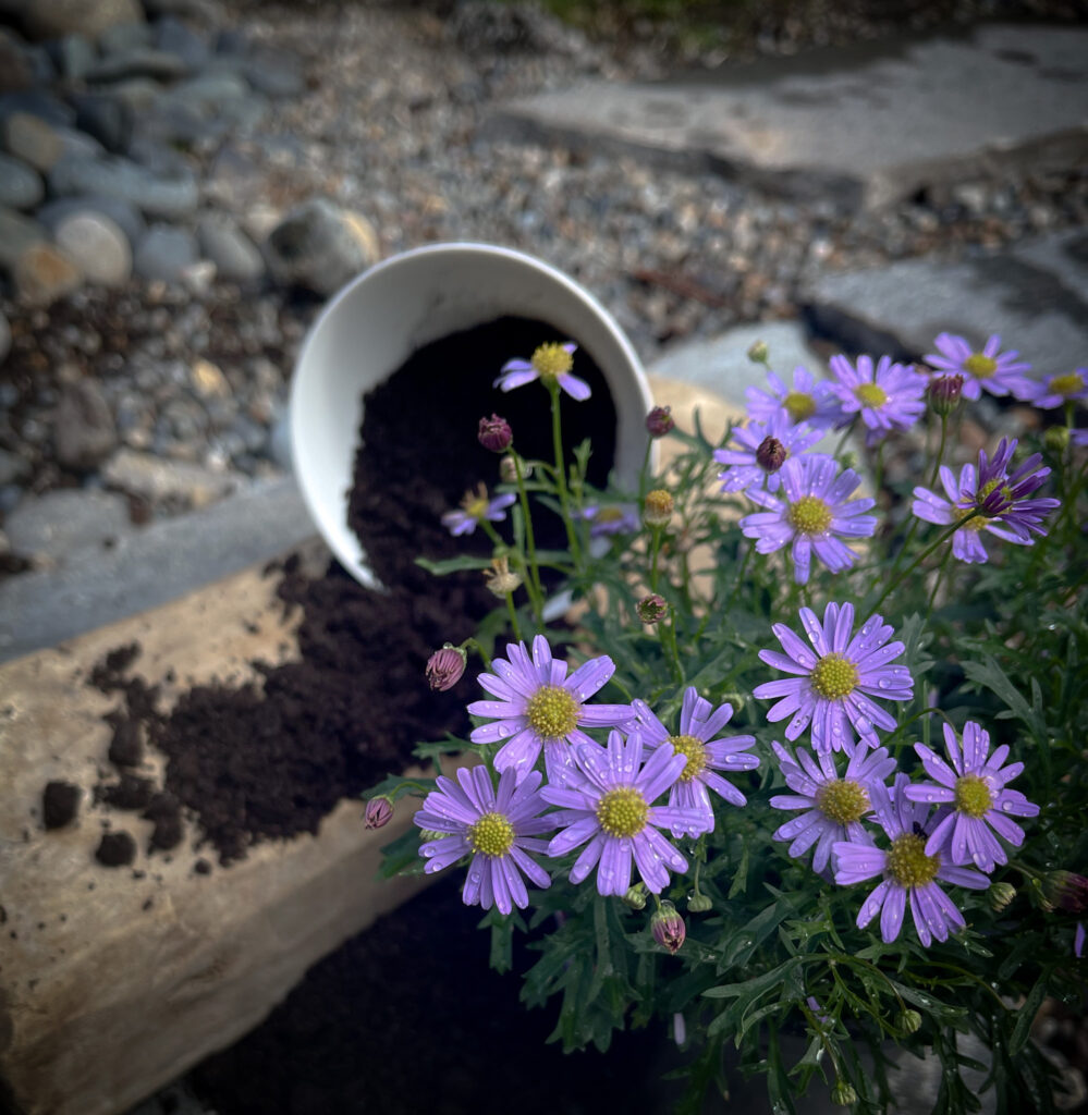 Favorite gardening Tools 13.  Cup with soil and flowers on the side.