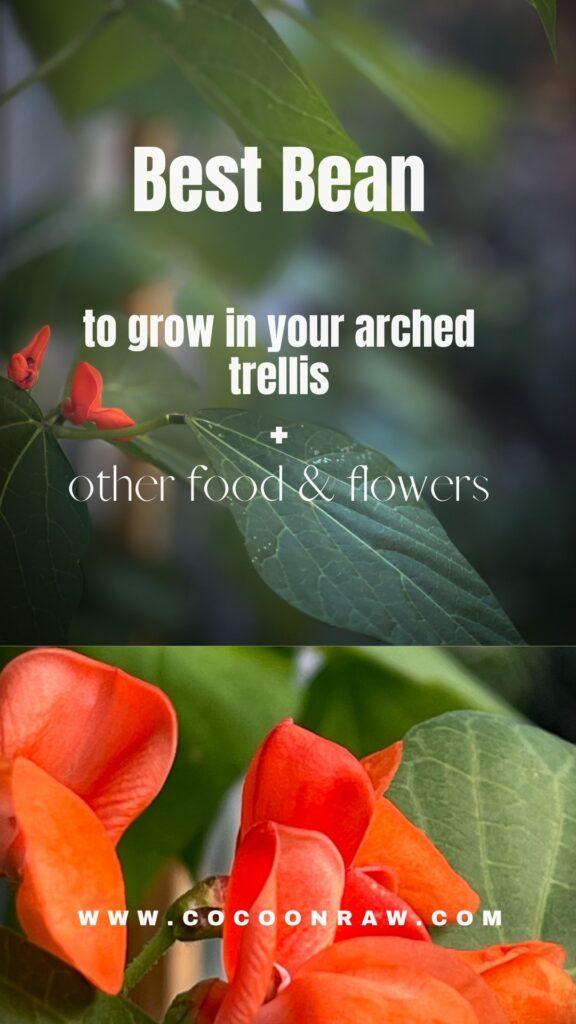 plant with orange flowers
