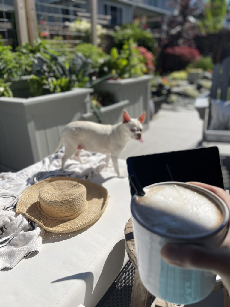 Summer Garden Walkthrough Dog