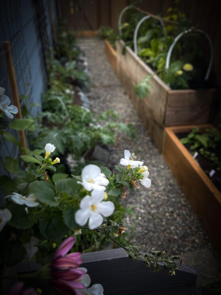 Dream Garden Beds