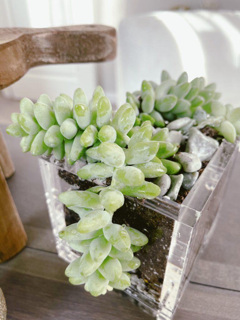 Succulent Garden  desk