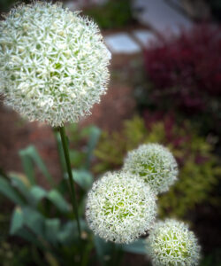 Dream Garden 2